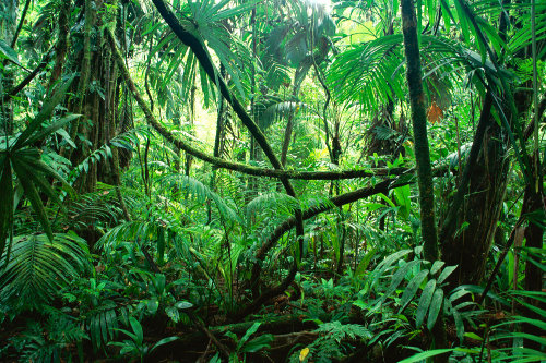 Life is a zoo in a jungle. Peter De Vries